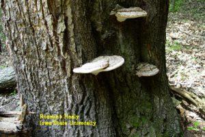 Washington DC Tree Trimming Experts- Appalachian Tree Company
